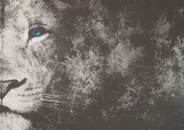 DRUCK-Kultur Premiumpartner der Löwen